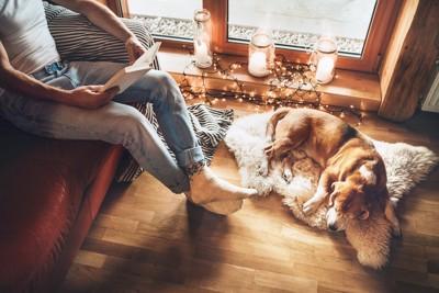 椅子に座って本を読む飼い主のそばで眠る犬