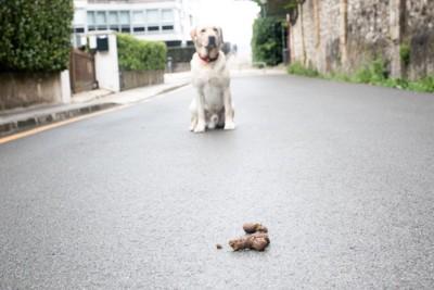 茶色い犬のウンチ