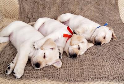 寝ている犬たち