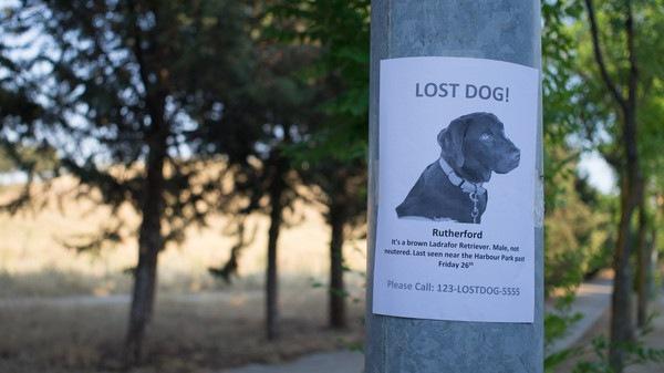 探し中の犬