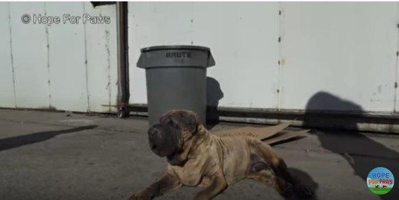 路上に横になる犬