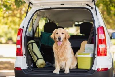 車の後ろに乗る犬