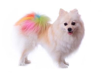カラーリングされた犬