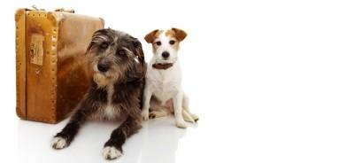 スーツケースの横でくつろぐ二匹の犬