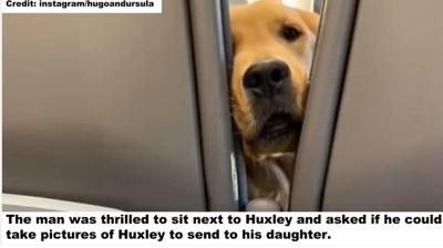 ハクスリーの写真