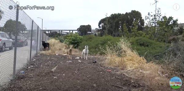 遠巻きに吠える犬