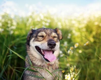 目を細めた笑顔の犬