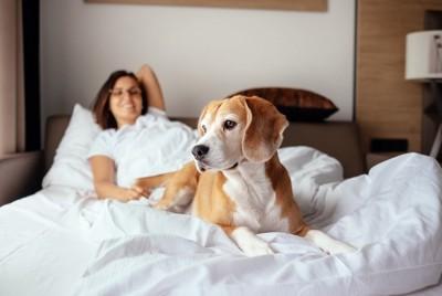 ホテル部屋でくつろぐ犬と女性