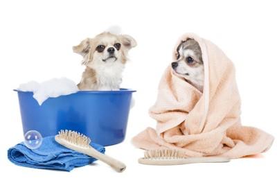 シャンプー中の犬とタオルを被っている犬