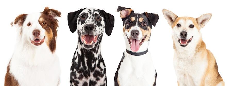 表情豊かな様々な種類の犬