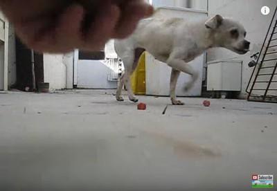 食べ物をさける犬