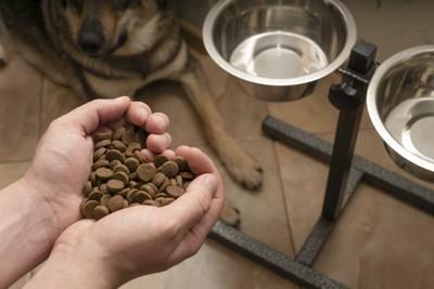 飼い主の手の上のドッグフードを待つ犬