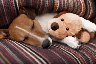 ぬいぐるみと寝る犬