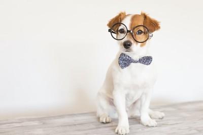 メガネをかけた賢そうな犬