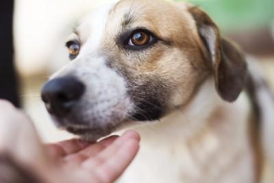 顎下を撫でられる犬