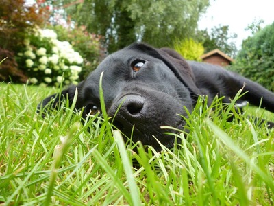 草の上に横になる犬