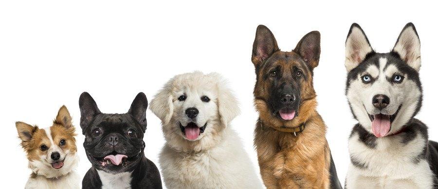 5匹の犬の写真
