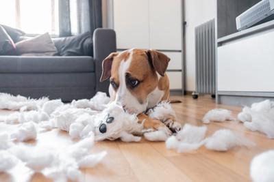 テディベアを破壊する犬