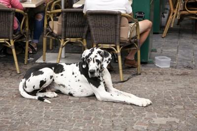 カフェでお利口に待つ犬
