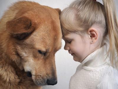 頭をくっつける犬と女の子