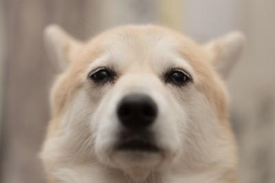 寂しそうな顔の犬