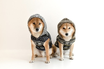 お揃いの洋服を着る二匹の犬
