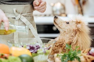 キッチンで料理中の飼い主を見つめる犬