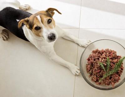 ご飯の前で伏せて待つ犬