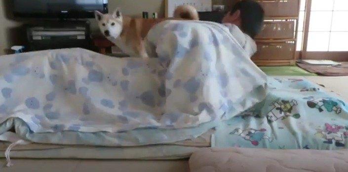 起き上がる
