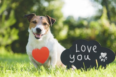 love youのボードと犬