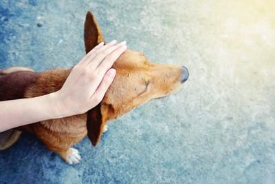 犬の頭を撫でる女性の手