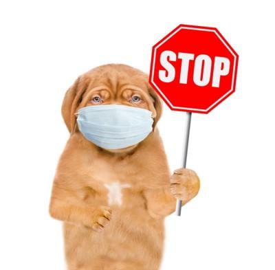 STOPと書かれた看板を持ってマスクを着けた犬