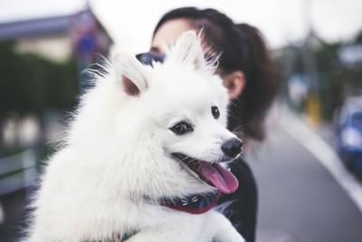 女性に抱っこしてもらっている白い犬