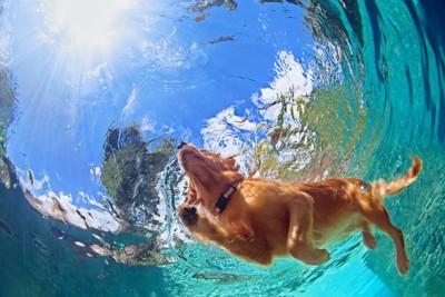 泳いでいる犬
