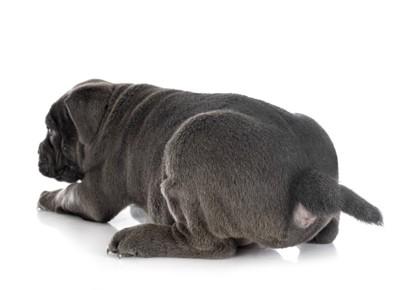 おしりを向けている犬の写真
