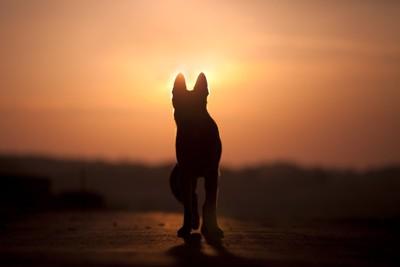 夕焼けを背景にたたずむ犬