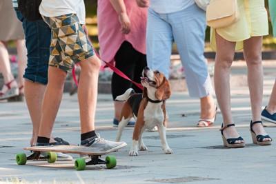 人混みの中の犬