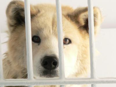 判定に落ち、ガス室にて殺処分された犬