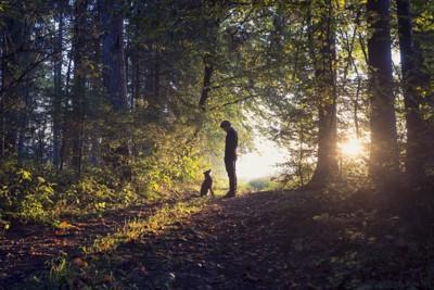 森の中で向かい合う犬と人