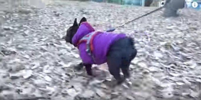 走るココちゃん