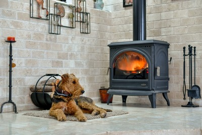 暖炉の前にいる犬