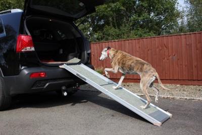 スロープを使って車に乗る犬