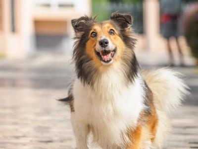 こちらを笑顔で見つめる犬