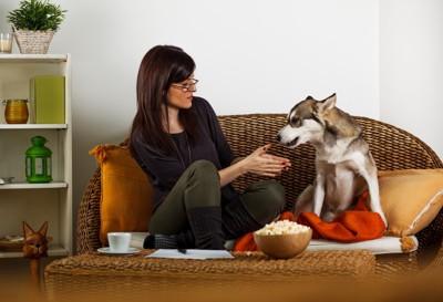 飼い主と犬とポップコーン