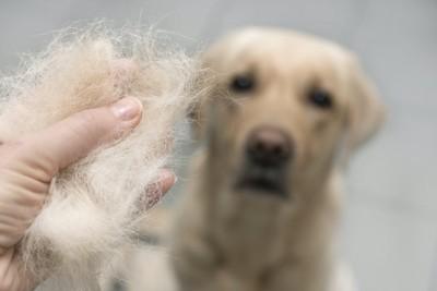 犬の抜け毛を持つ人の手を見る犬