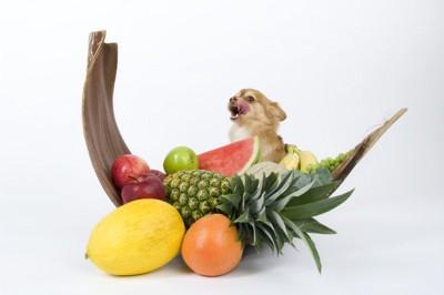 大量の果物と犬
