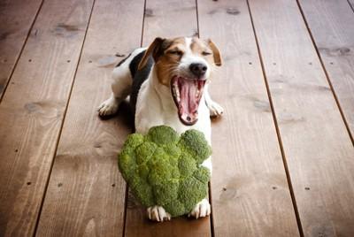 ブロッコリーと犬