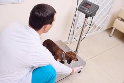 体重計測中の犬と獣医師