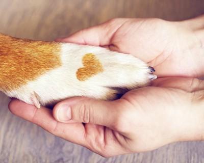 ハート形の模様のある犬の前足と人の手