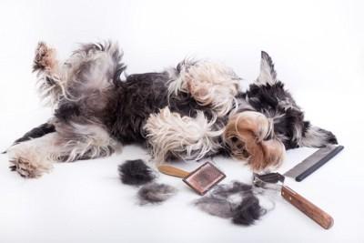 犬とブラシ数種類